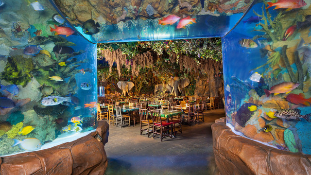 rainforest-cafe-downtown-disney-gallery02
