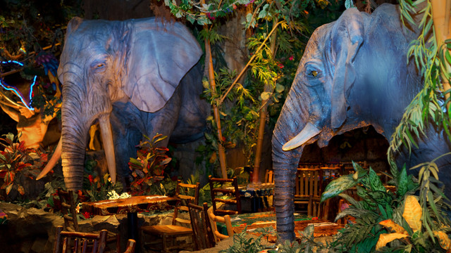 rainforest-cafe-downtown-disney-gallery04